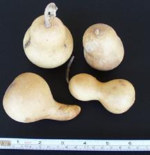 gourdgroup.jpg